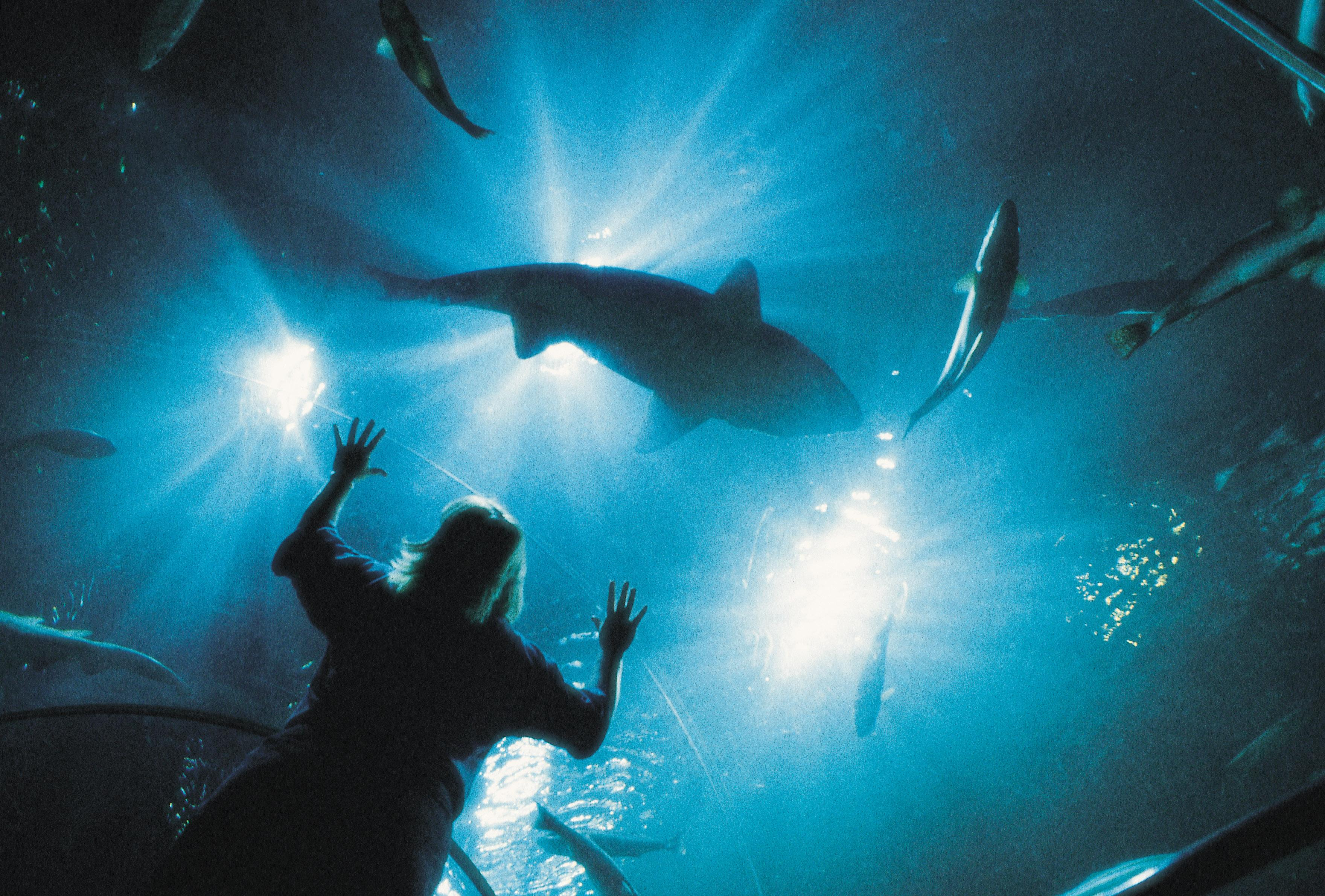 A VISITOR LOOKS UP TO SHARK AND OTHER FISH SWIMMING IN A TANK AT DEEP SEA WORLD, NORTH QUEENSFERRY, FIFE.