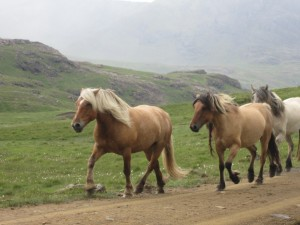There was a whole herd of them galloping towards us