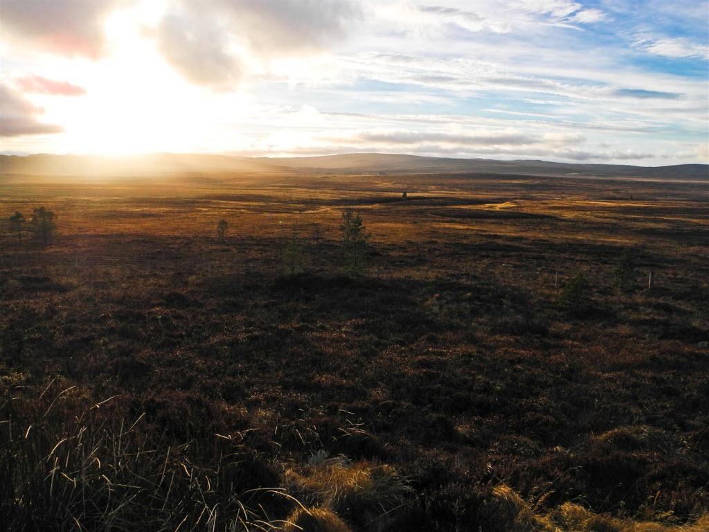 Highlands landscape