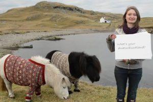 Shetland Ponies - Natural Scotland
