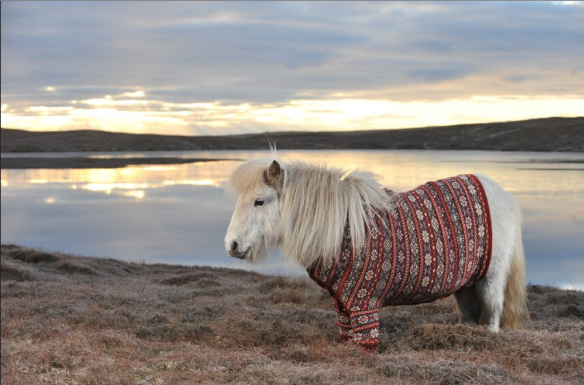 A grey Shetland ponies in a cardigan with a loch behind.