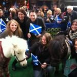 Shetland Ponies in Cardigans at Scotland Week