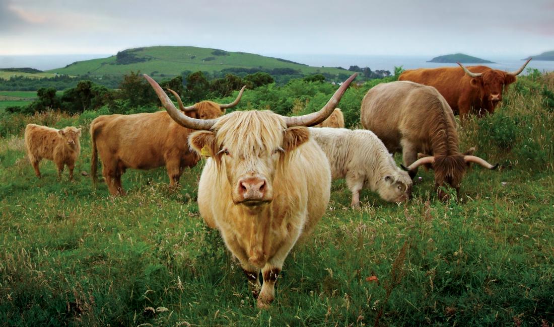 Meet the Highlanders
