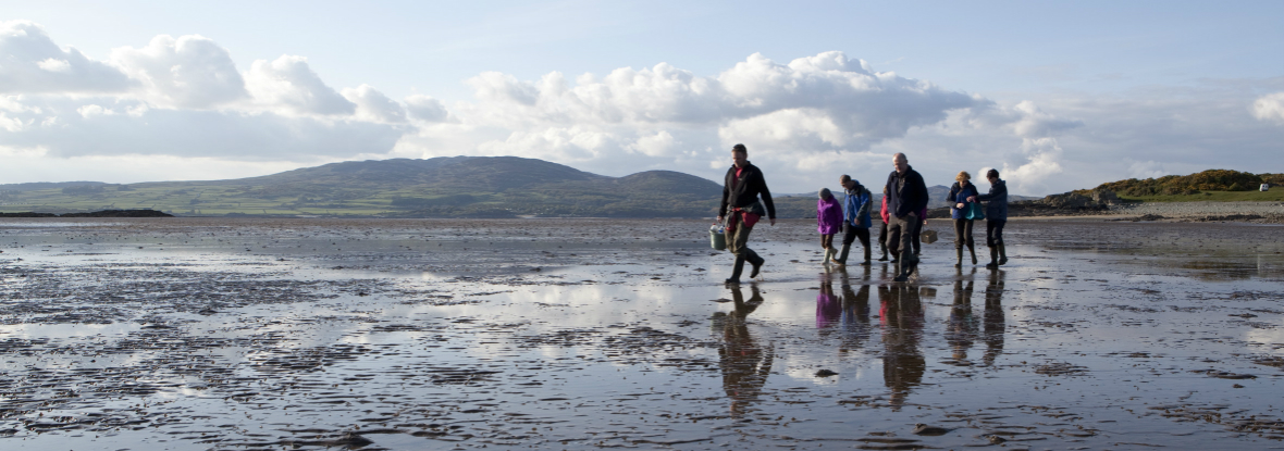 Galloway Wild Foods Coastal Foraging