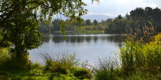 A calm loch reflects the surrounding trees and bushes