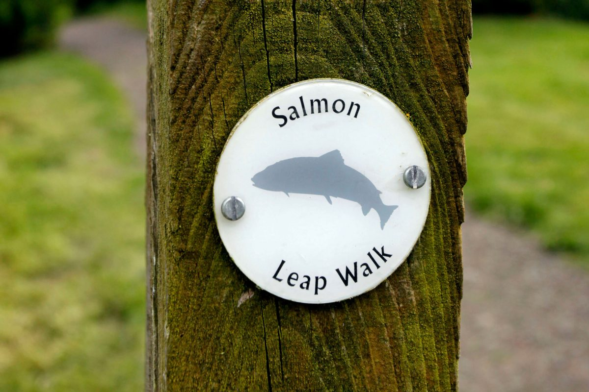 Way marker post on the Salmon Leap Walk at the Salmon Viewing Centre, Philiphaugh Estate, Selkirk, Scottish Borders