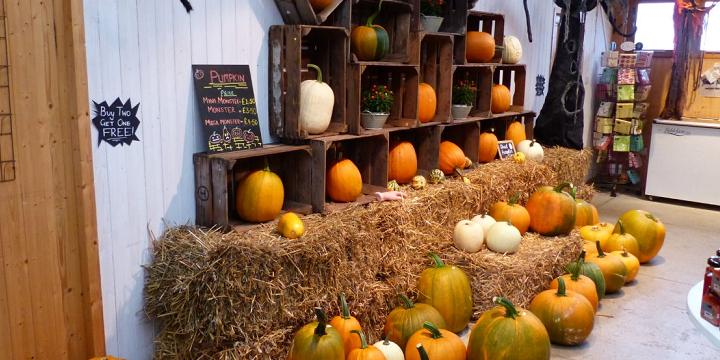 Pumpkins of different shapes, colours and sizes displayed on hay bales