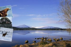 Loch Morlich and wildlife