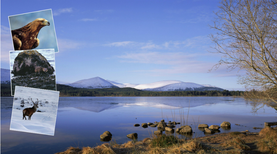 Loch Morlich in the heart of the Cairngorms National Park