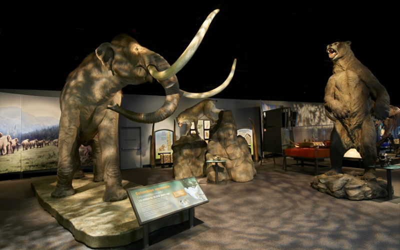 Exhibition Photo: Mammoths of the Ice Age will include several life-size recreations of other Ice Age animals. This exhibition photo features both the short-faced bear and the saber-tooth cat in the background. © The Field Museum