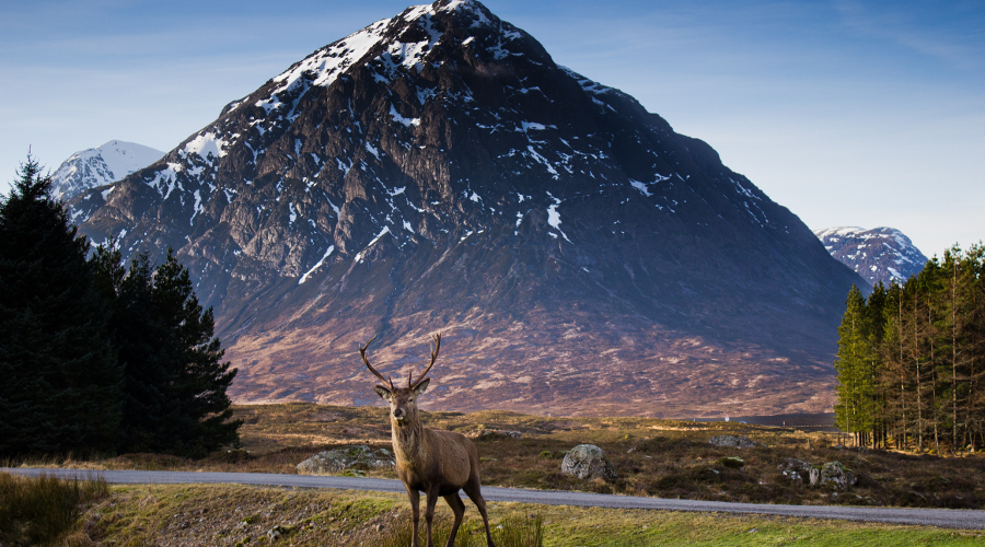 Stag of Etive Mor
