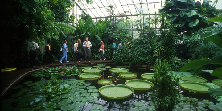 Inside one of the Glasshouses in the Edinburgh's Royal Botanic Garden