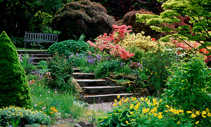 Looking over to a garden path through colourful flowerbeds.