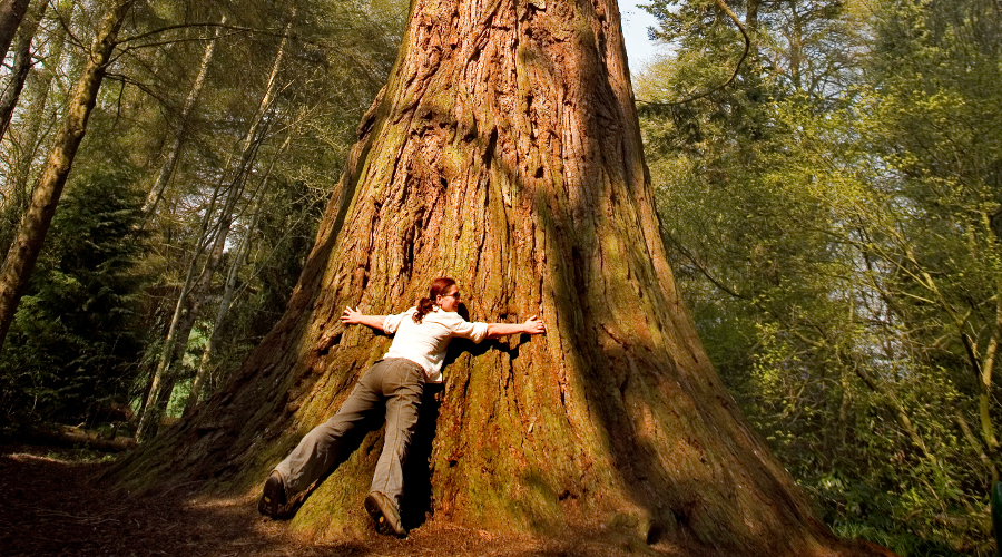Hug a tree in Perthshire's Big Tree Country!