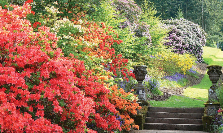 Looking along the vivid floral border at Azalea Terrace.