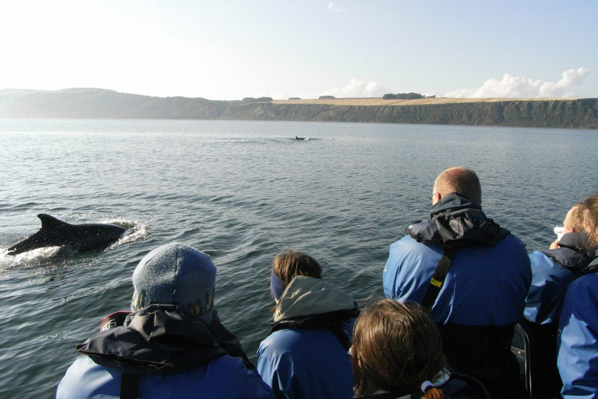 Passengers viewing Dolphins, Moray Firth © EcoVentures
