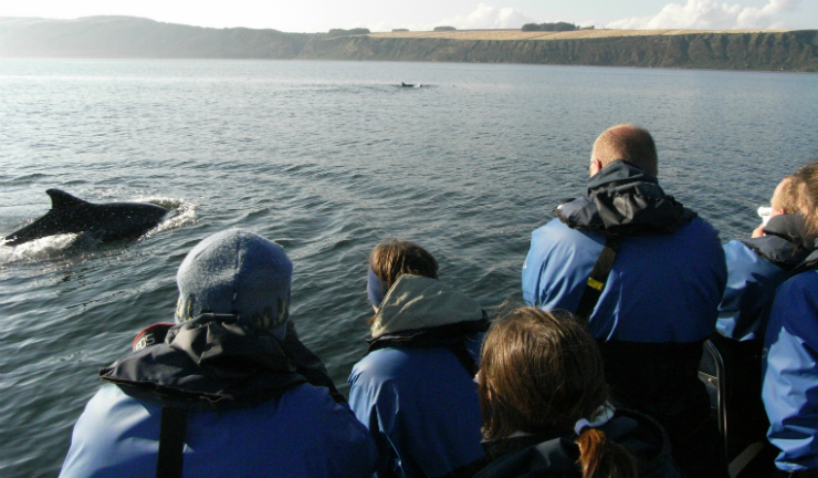 A wildlife boat trip on the Moray Firth. Image credit Ecoventures