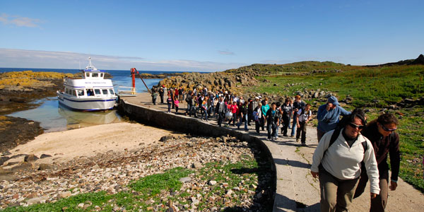 The Isle of May welcomes 10,000 visitors each year