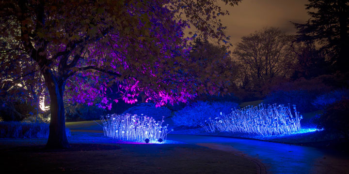Night in the garden edinburgh events for A night at the garden