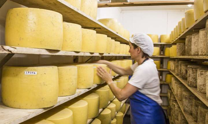 Cheddar cheese at the Anstruther Dairy Farm - St Andrews Cheese Company