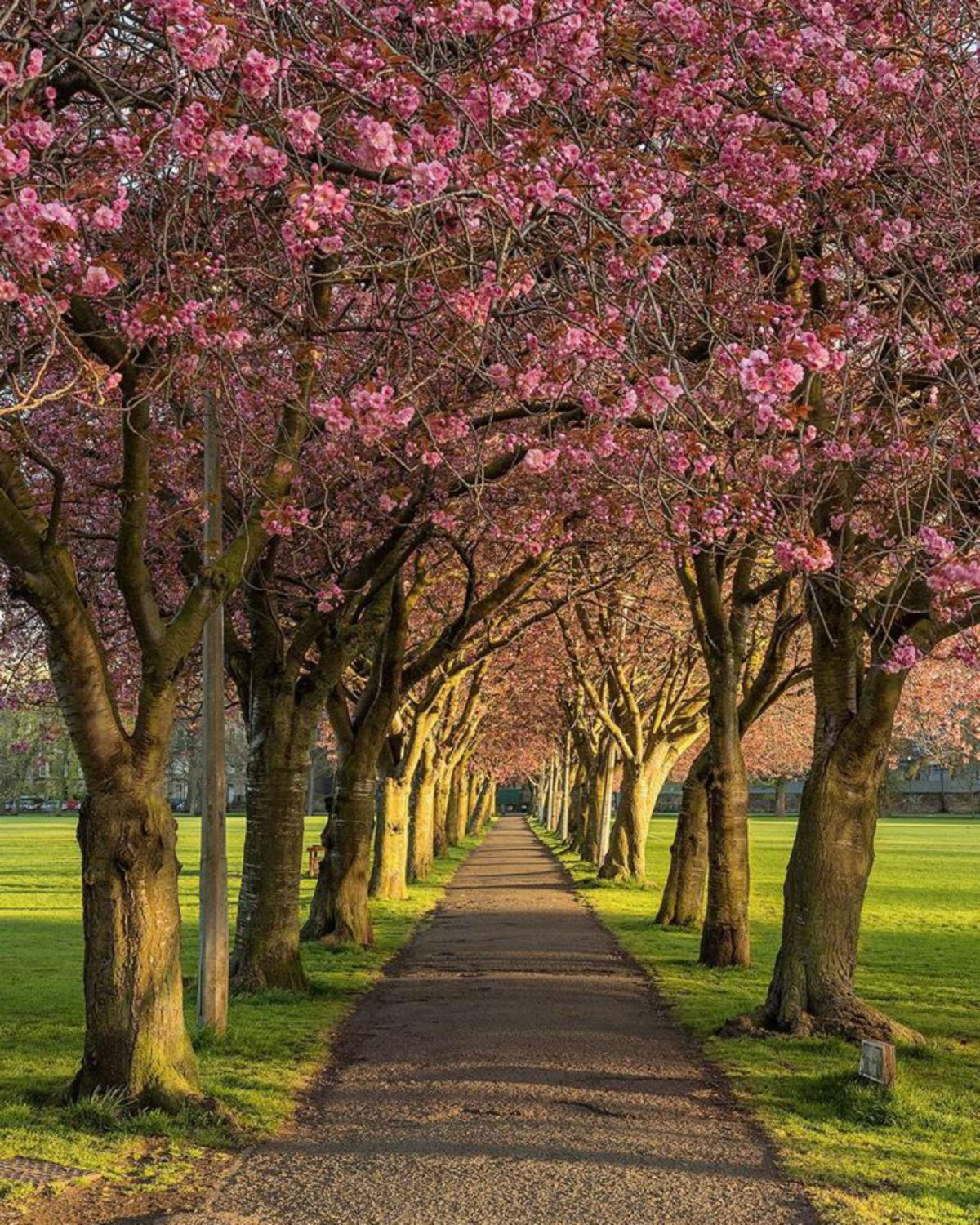 33 Stunning Photos That Prove That Spring In Scotland Is