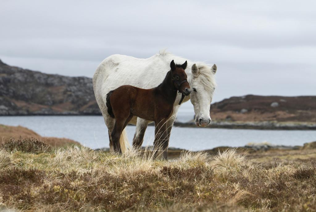 6 Ways To Horse Around In Scotland