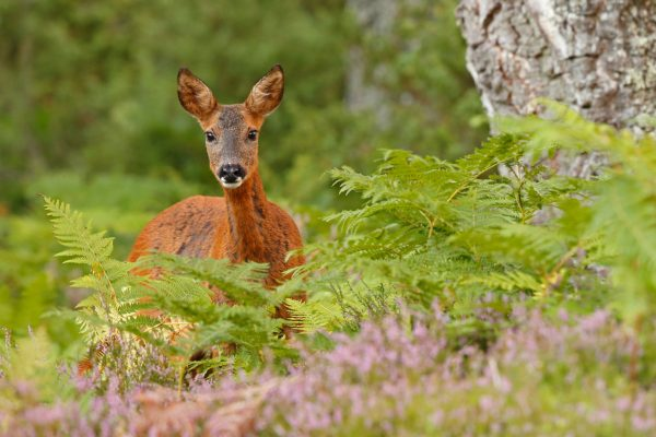 Journey into Scotland's Wild Heart: BBC Scotland