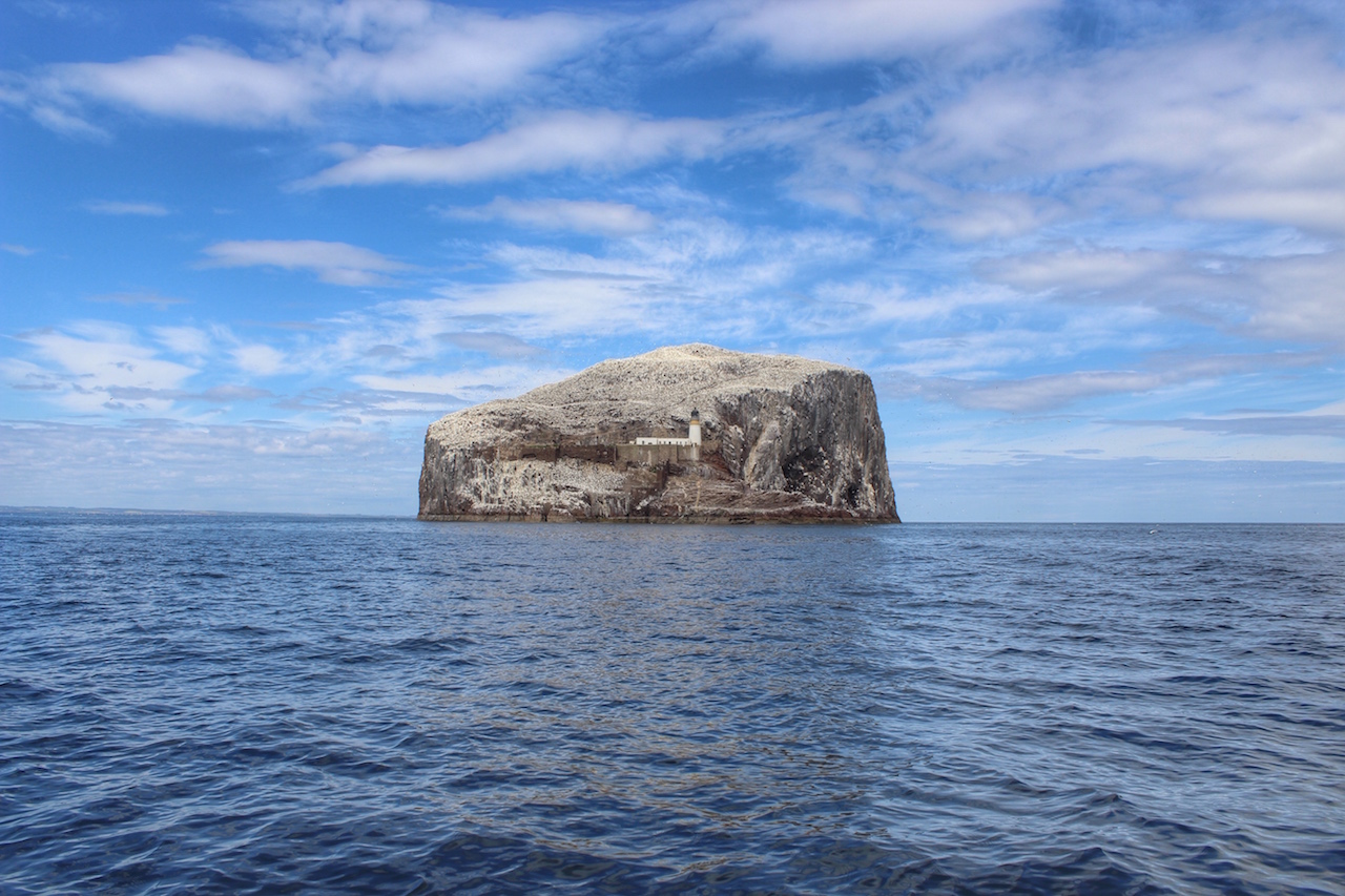 The Bass Rock © Nicola Holland