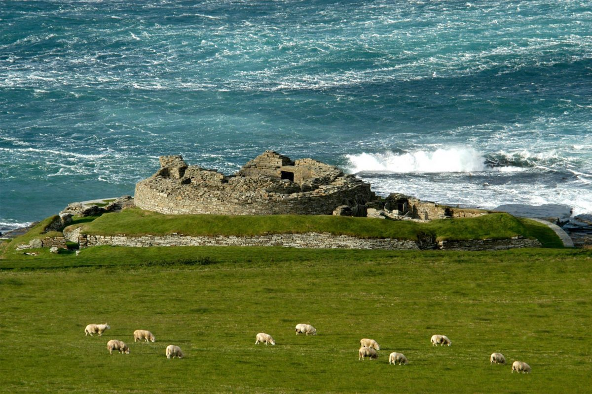 Considerable remains of a stone broch, with sea beyond and sheep grazing in the foreground.