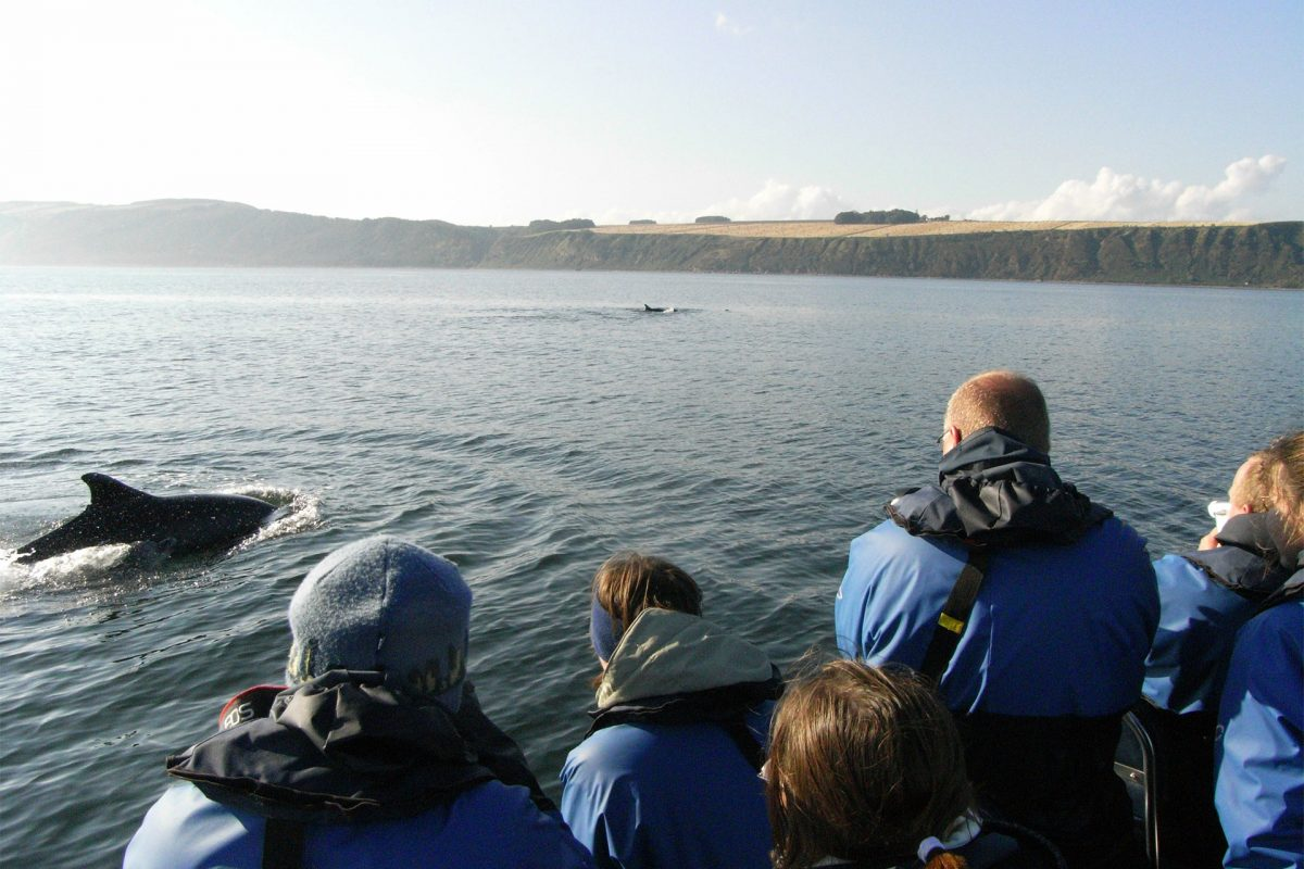 Passengers viewing Dolphins, Moray Firth