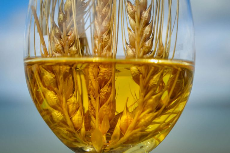 Barley in a glass of whisky