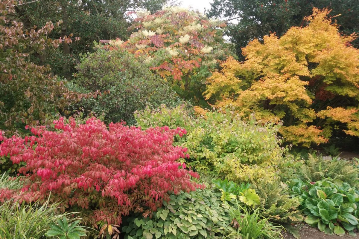 Lovely autumn colours at Cambo Gardens, Fife