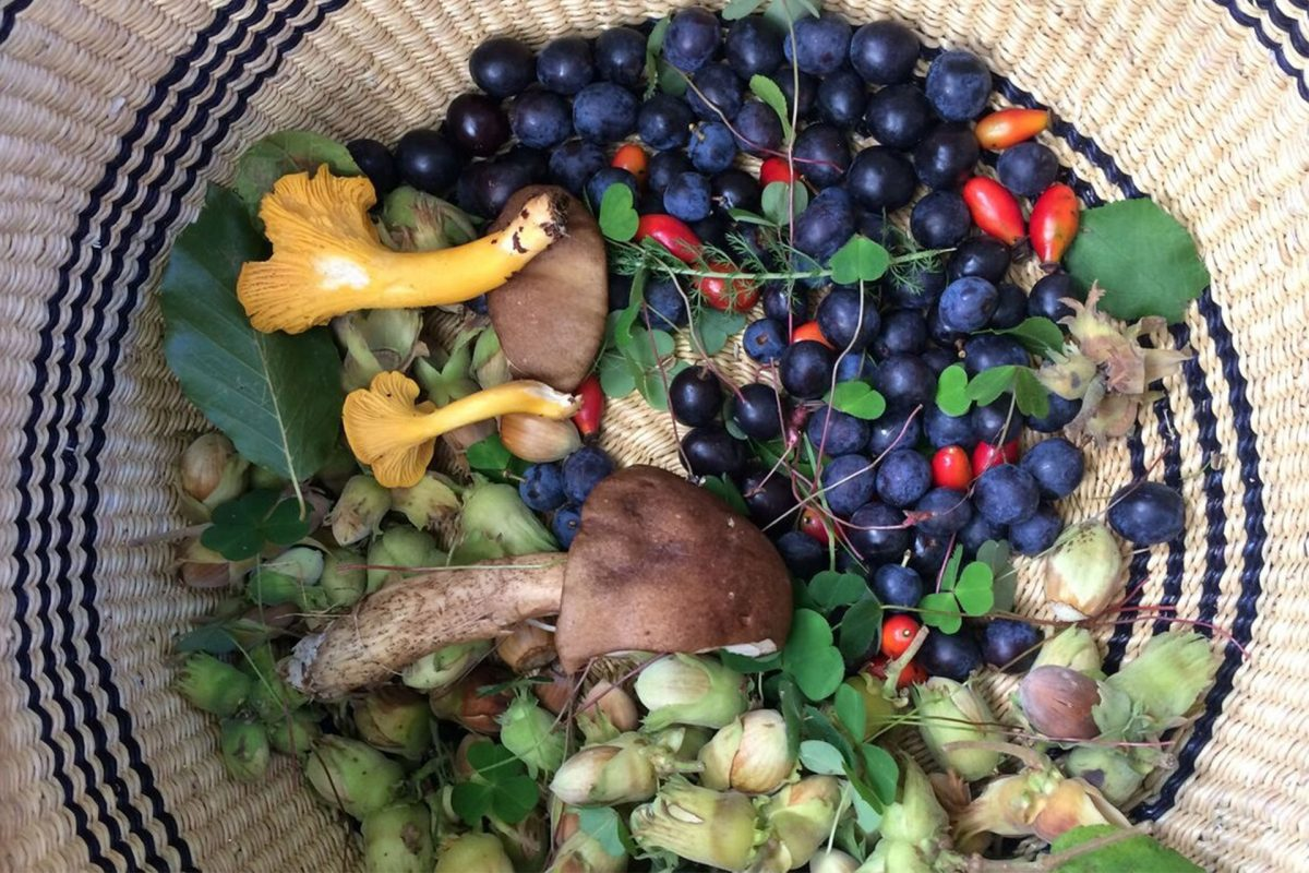 A basket full of natural goodness - Foraging Fortnight