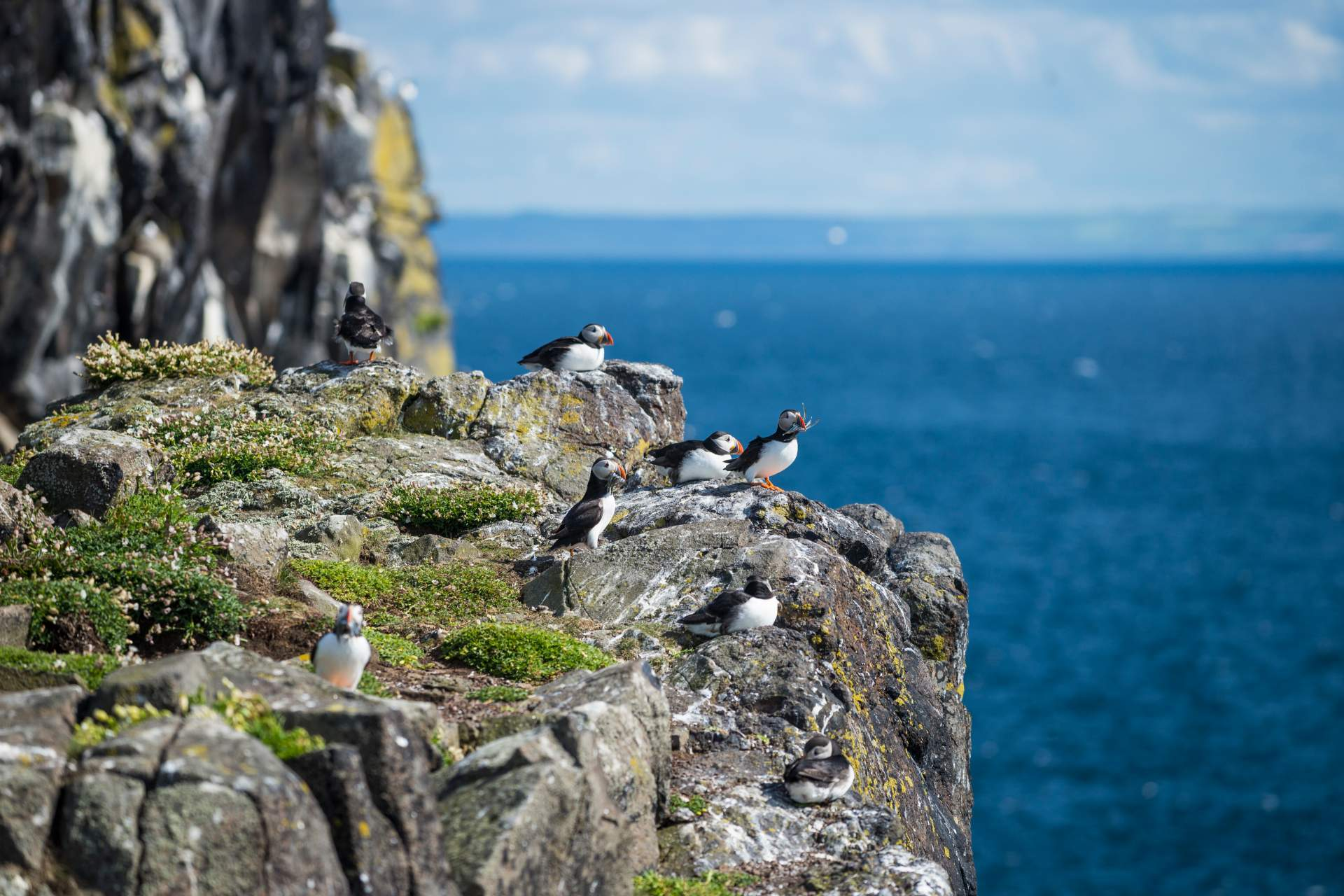 Puffins on the Isle of May