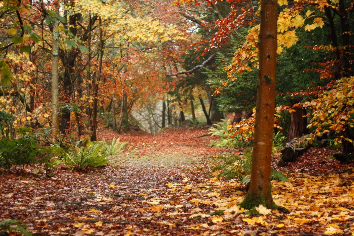 Enjoy leafy autumn walks in Hopetoun Estate, South Queensferry