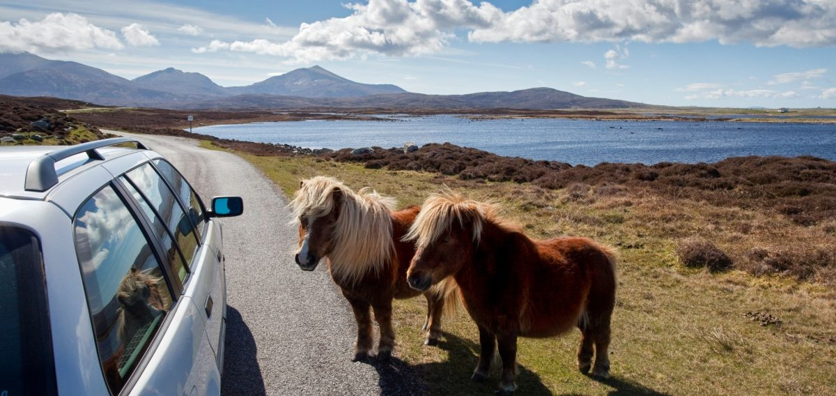 Make new friends at Loch Skipport, Isle of South Uist