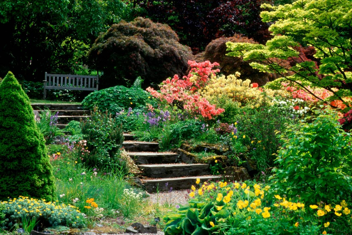 A colourful summer scene in Perth's Branklyn Gardens