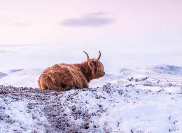 9 Ideas for a Perfect Winter Break in the Highlands