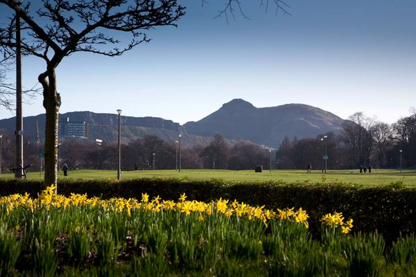 Daffodils on the corner of Bruntsfield Links and looking over the Meadows and beyond to Arthur's Seat, Edinburgh