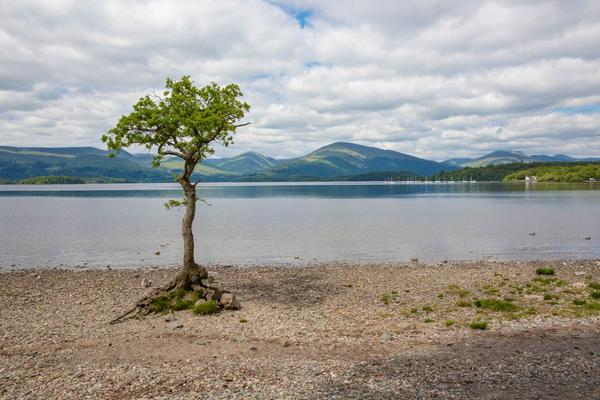Looking out over Loch Lomond, past a tree, in the National Park