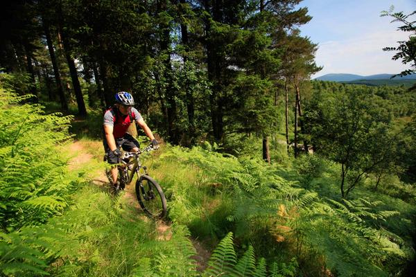 Un appassionato di mountain bike sulla pista rossa Phoenix Trail al 7stanes Mabie Mountain Biking Centre, nella foresta di Mabie, vicino Dumfries