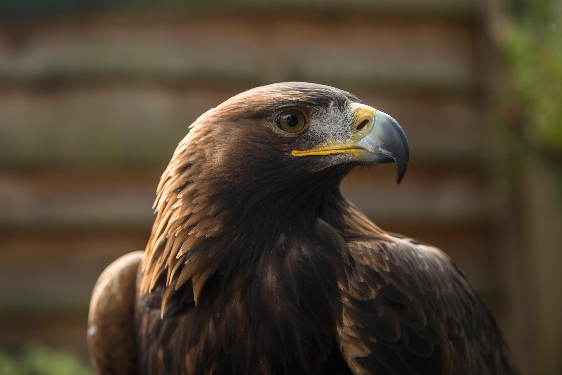 scottish birds u0026 bird watching visitscotland