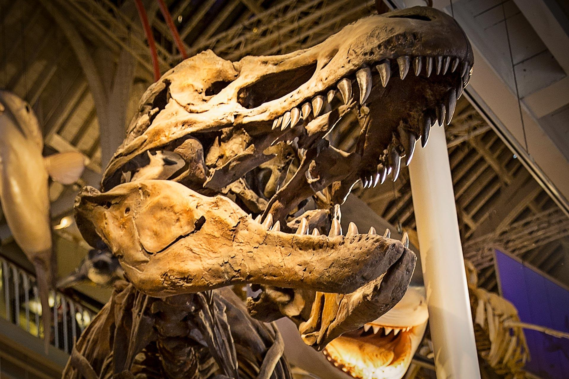 Image of: Enemy Dinosaur Skeleton National Museum Of Scotland National Trust For Scotland Scotlands Unmissable Family Attractions Visitscotland