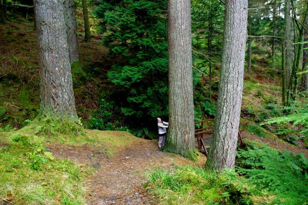 Eeuwenoude bossen in Puck's Glen in het Argyll Forest Park © Loch Lomond & The Trossachs National Park