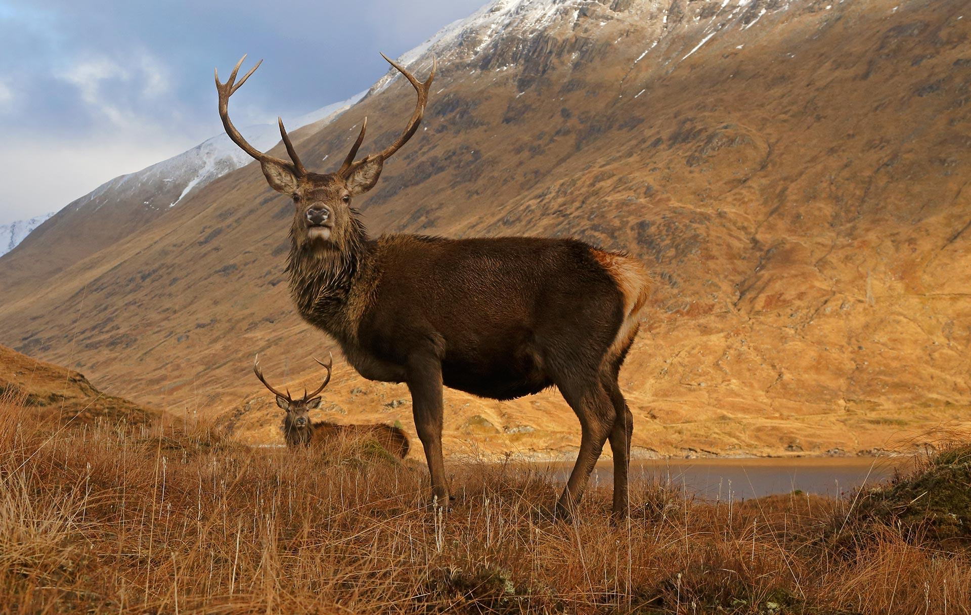 Image of: Endangered Species Wildlife Rescue Association Of Bc Scottish Animals Wildlife Visitscotland