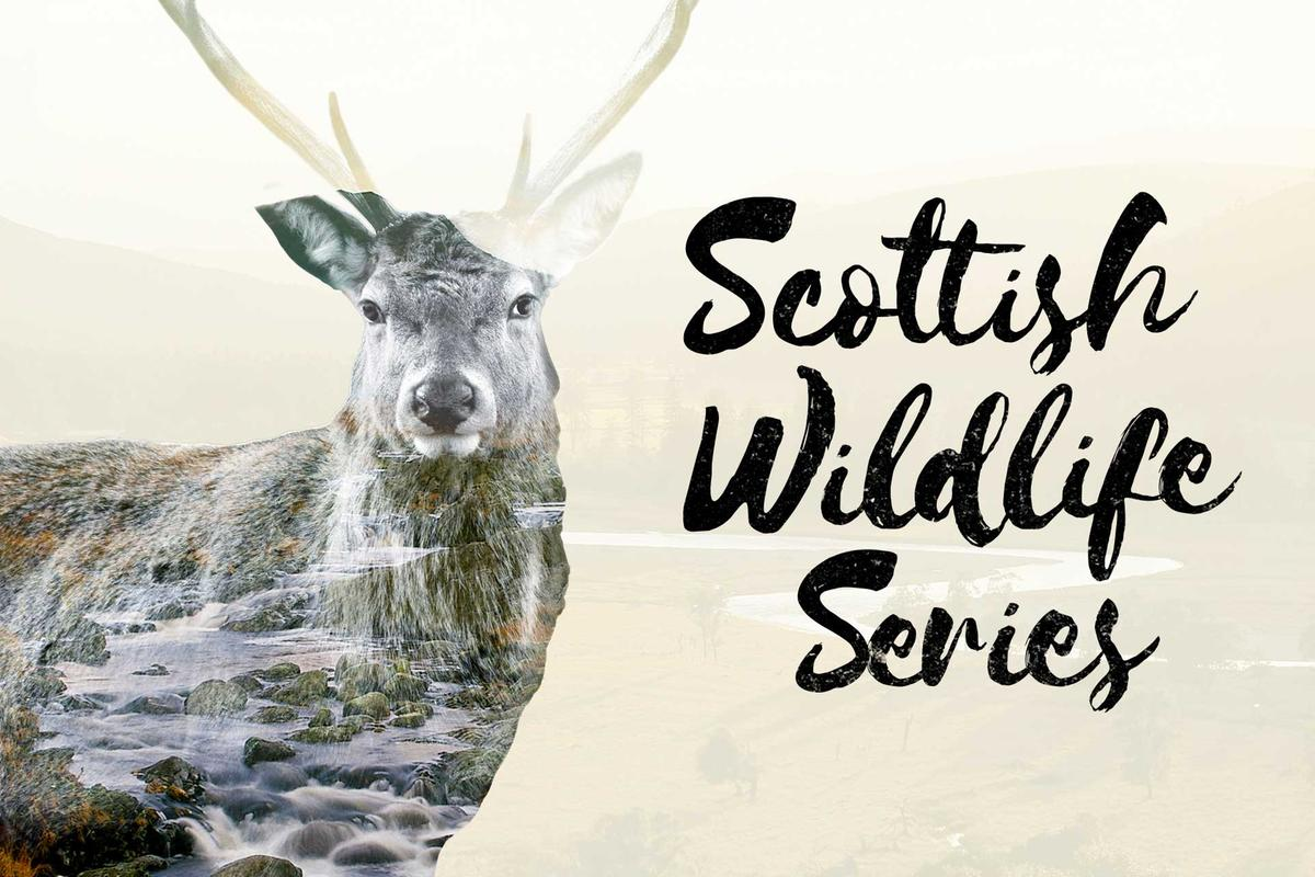 Scottish Wildlife Series