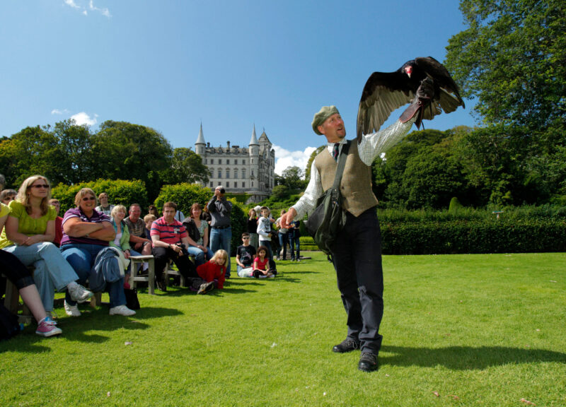 A Falconry Demonstration By Resident Falconer Andy Hughes At Dunrobin Castle Near Golspie Sutherland