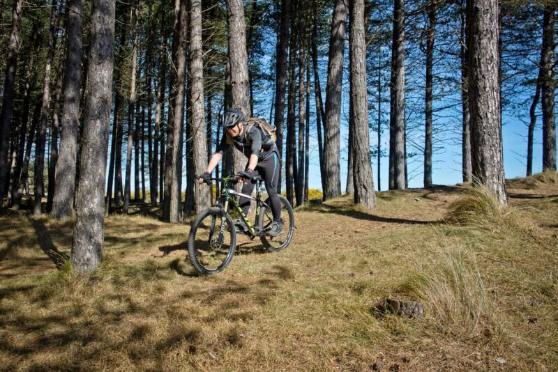 Mountain Biker On A Cycle Route In Tentsmuir Forest