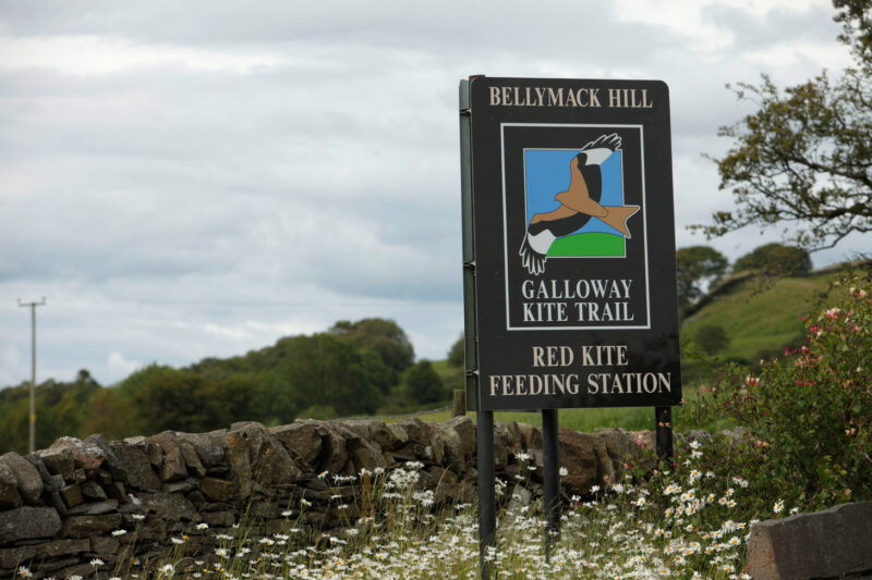 The Galloway Kite Trail Bellymack Hill Farm Red Kite Feeding Station
