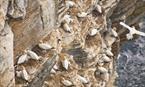 Birsay Moors Nature Reserve - RSPB